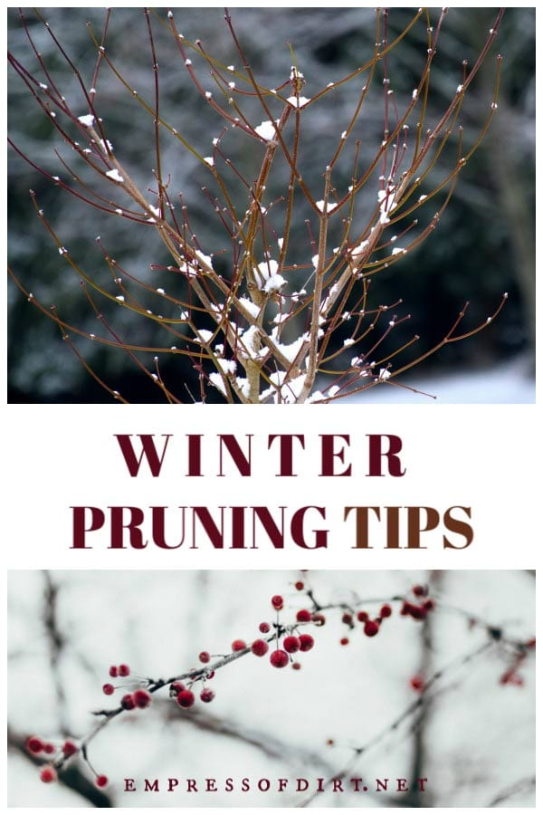 What to prune in winter plus tips for best results. This is the season to prune apple trees and other plants that do not flower in early spring.