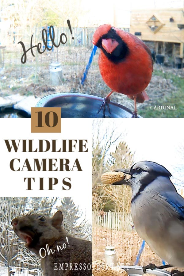 Secretly Photograph Your Backyard Birds with a Wildlife Camera