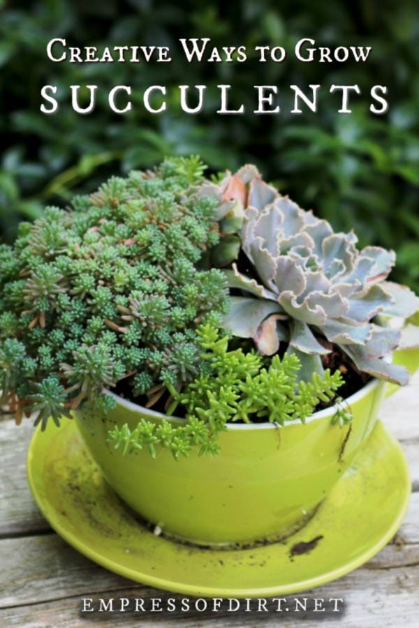 Creative ideas for growing succulents.
