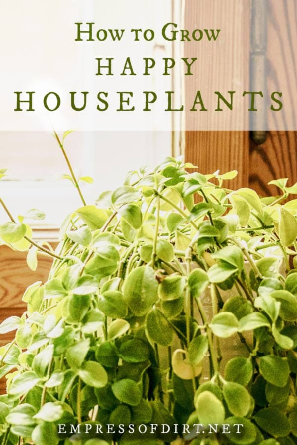 Tips for Growing Healthy Houseplants