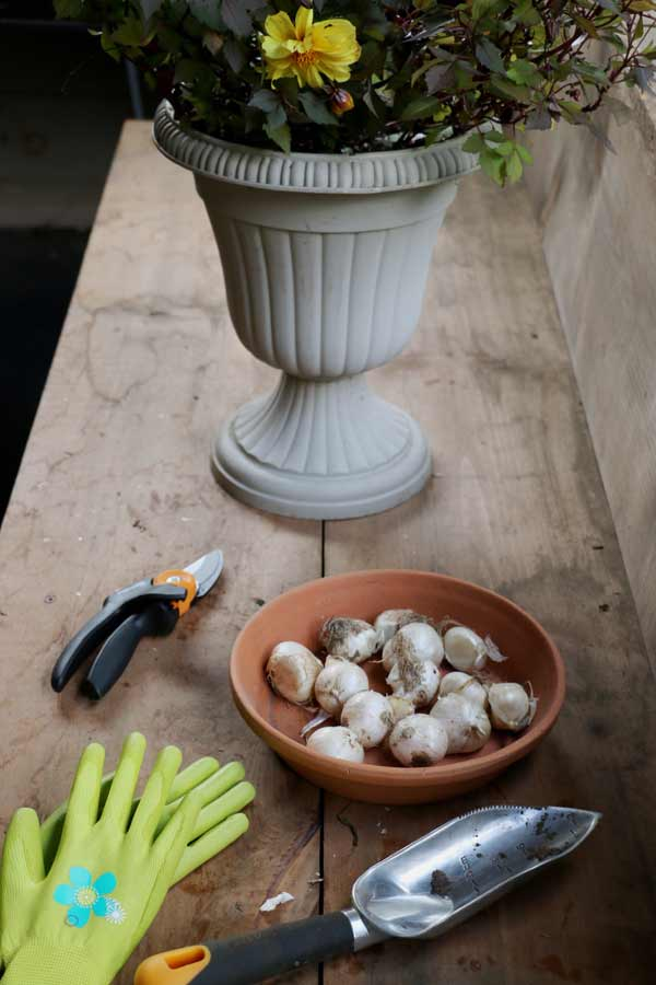 Fall is the time to dig up tender bulbs and plant hardy ones.