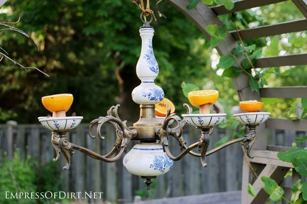 Turn an old chandelier into a bird feeder. This one holds oranges for the Baltimore orioles.