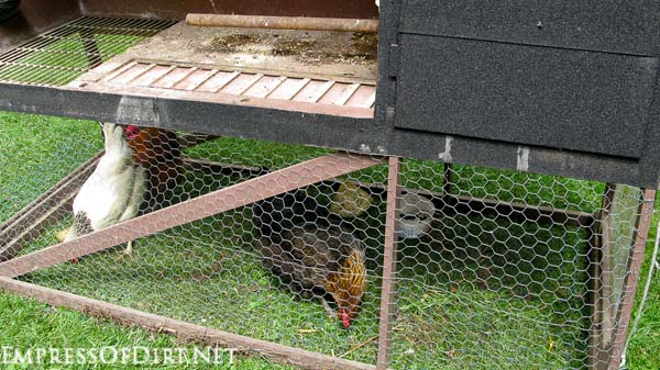 Chicken tractor with grazing area underneath.