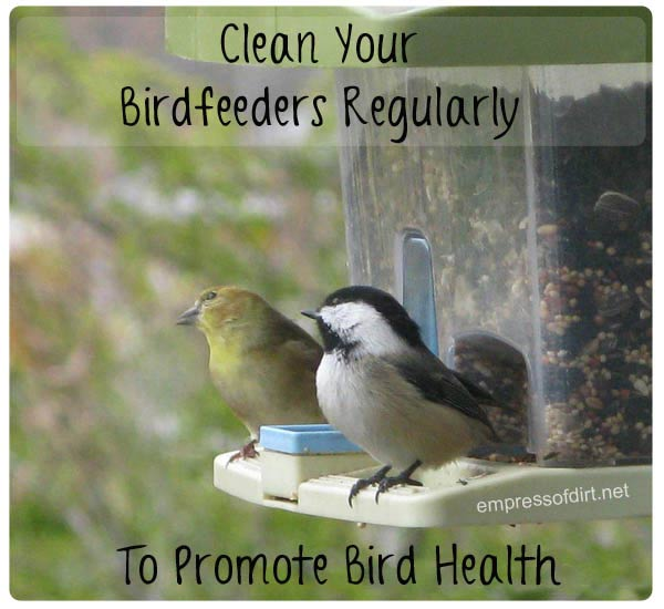 Clean your bird feeders regularly to promote bird health