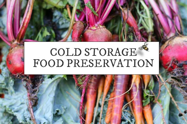 Cold Storage 101: Food Preservation Tips