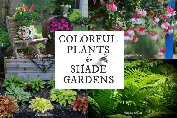 Colorful Flowering Plants for Shade Gardens