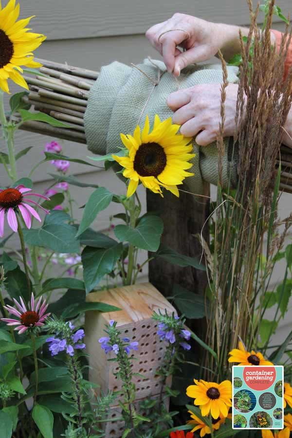 This pollinator garden in a trashcan project is from the new book, Container Gardening Complete: creative projects for growing vegetables and flowers in small spaces by Jessica Walliser.