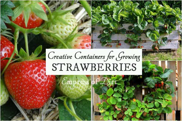 creative-strawberry-containers-h1