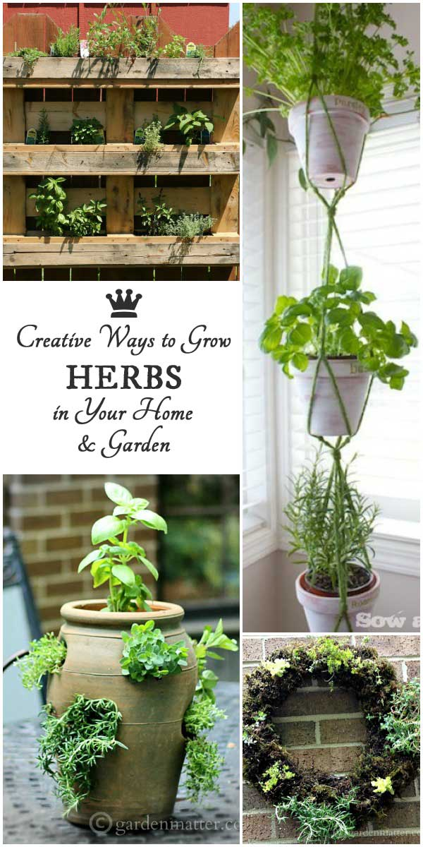 Creative Ways to Grow Herbs