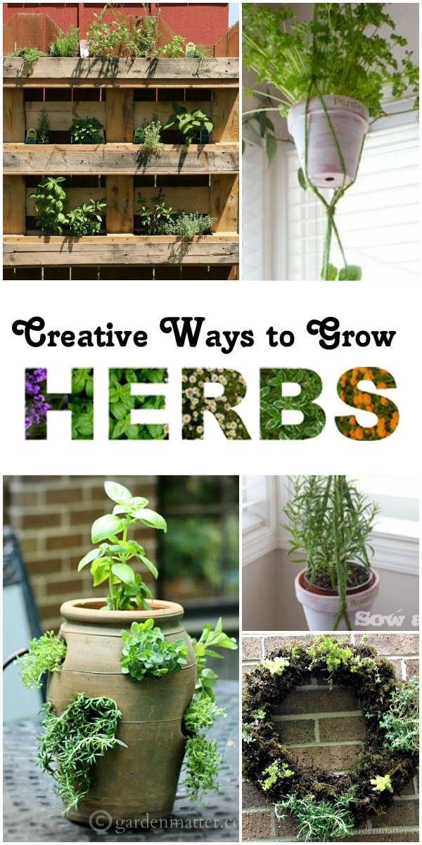 Creative Ways to Grow Herbs Cbb1