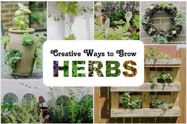 There are many benefits to growing herbs in containers. When they're portable, you can find their preferred sun and shade locations, and keep them close to the kitchen for cooking. Come have a look at these creative planter options.