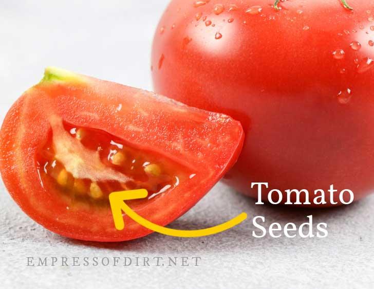Inside tomato showing seeds in gelatinous coating.
