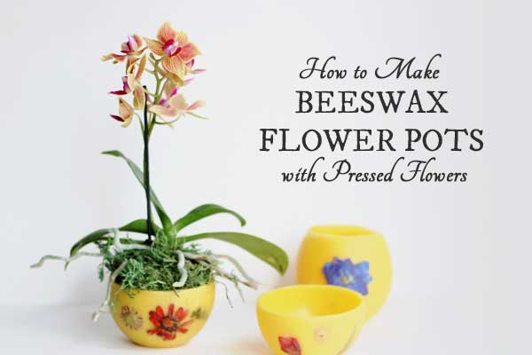 How to make beeswax flower pots with pressed flowers