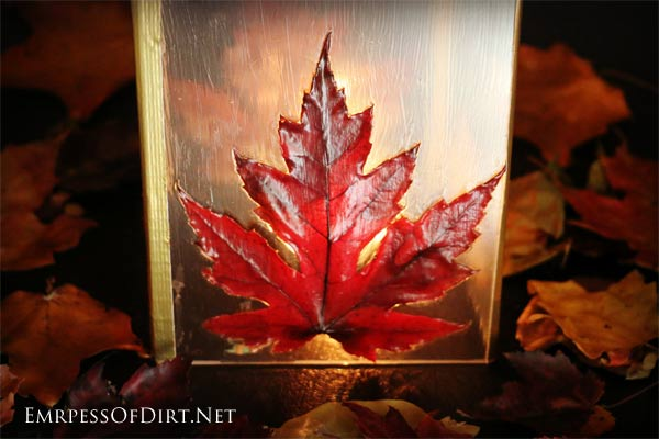 Love the beauty of autumn leaves? This frugal DIY leaf lantern is made from picture frame glass, leaves, and Mod Podge.