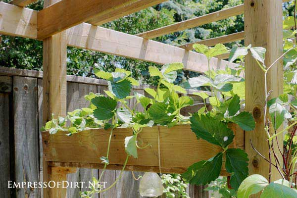 Create a sunshade arbor with strawberry planter boxes