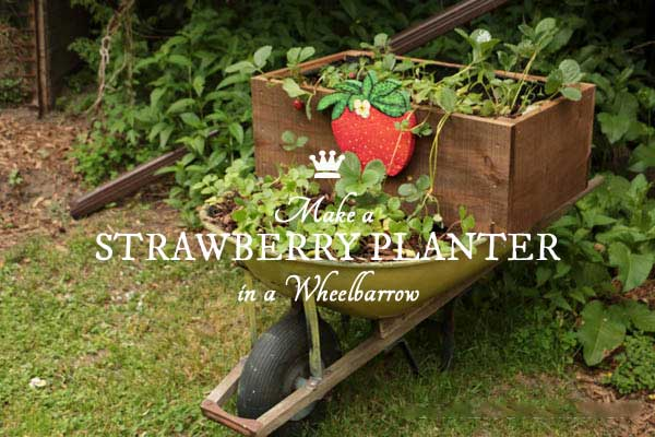 DIY Rolling Strawberry Wheelbarrow Planter