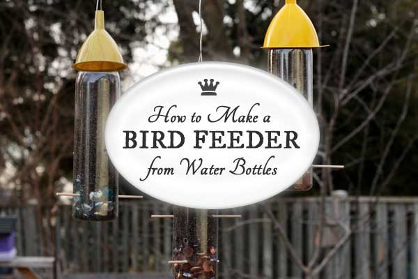 How to make a bird feeder from repurposed water botles