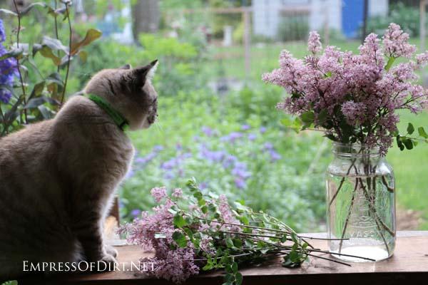 Bobo the cat, admiring the garden.