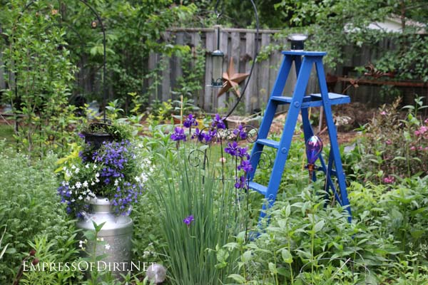 Blue ladder in the garden with silver milk can and lobelia flowers.