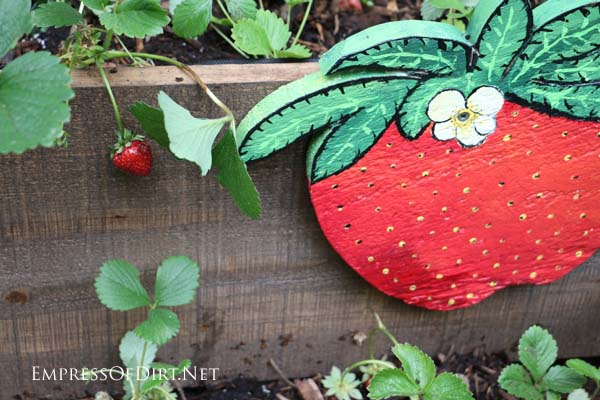Old wheelbarrow turned into a rolling strawberry planter.
