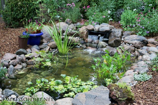 How to add fish to a backyard garden pond empress of dirt for Koi pond depth