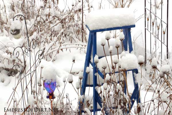 Snow on garden ladder.