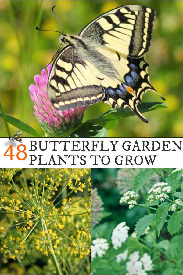 Want Butterfly Babies? Grow these Plants