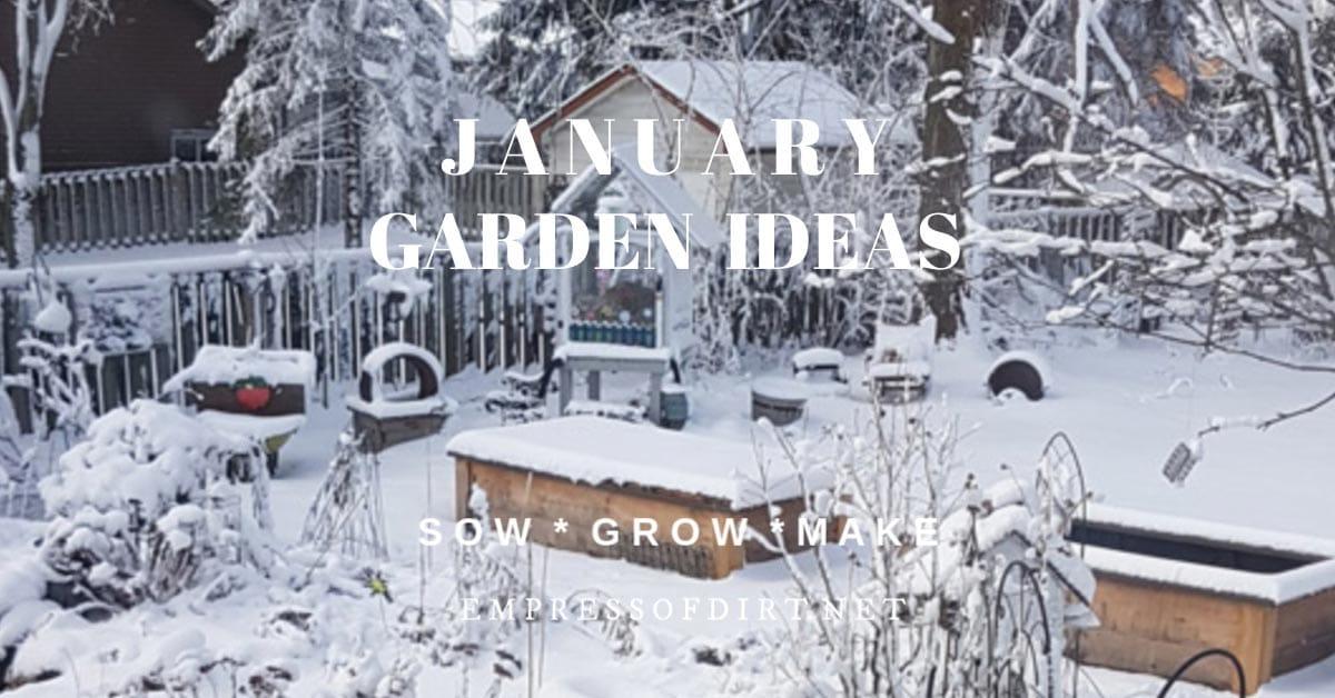 Snowy backyard garden in January