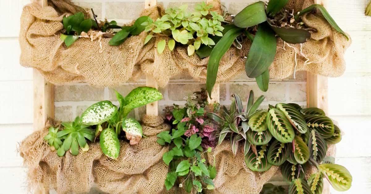 16 Creative Succulent Garden Ideas Empress Of Dirt