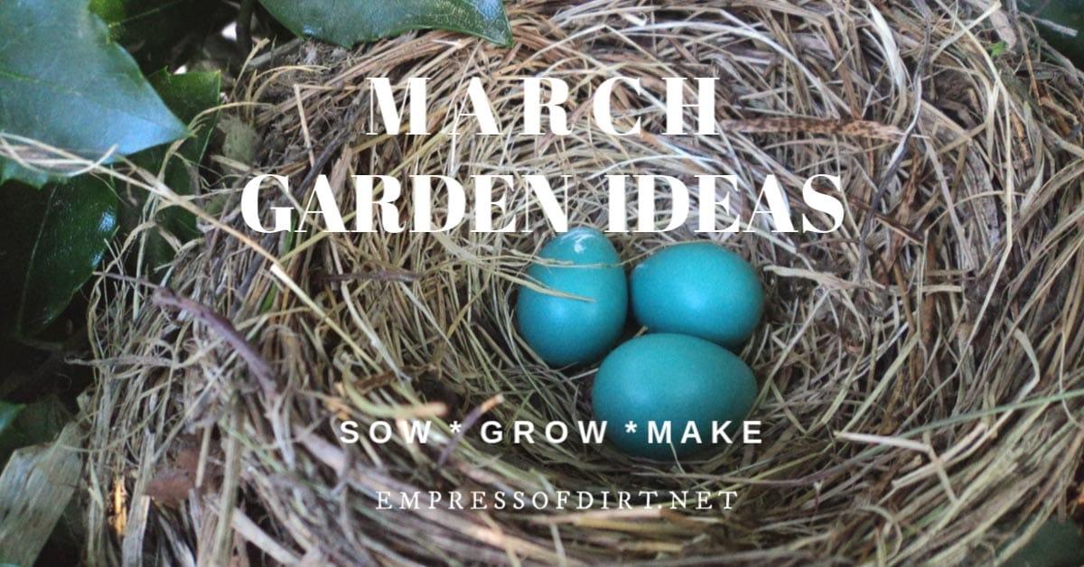 Bird nest in March garden.