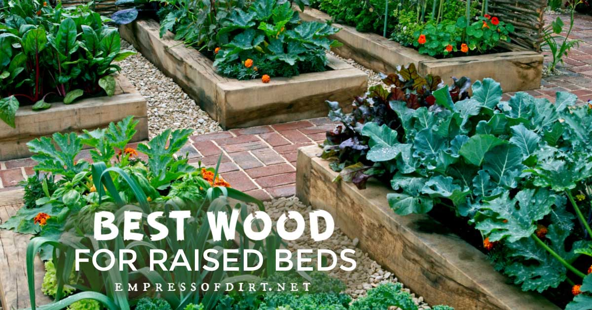 Picture of: Best Wood For Raised Garden Beds Empress Of Dirt