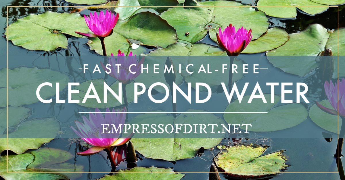 How to Clean Gross Murky Pond Water Fast—without Chemicals