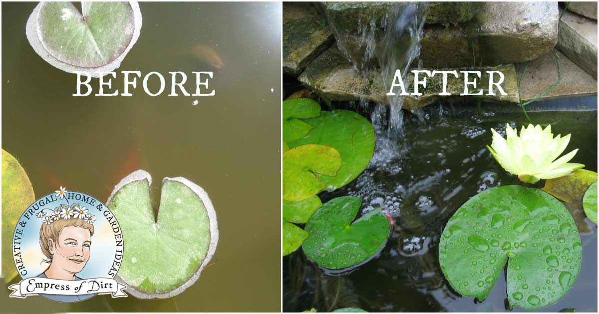 How to Clean Gross Murky Pond Water Fast—without Chemicals ...