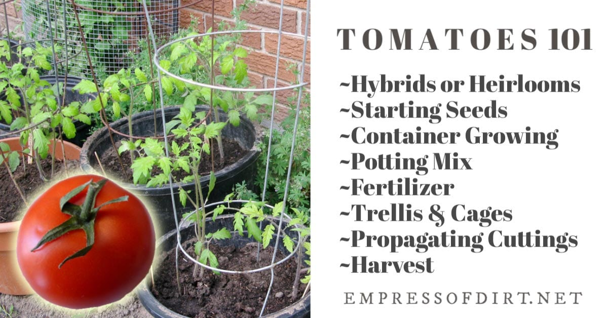 Tomatoes 101 A Quick Start Guide For