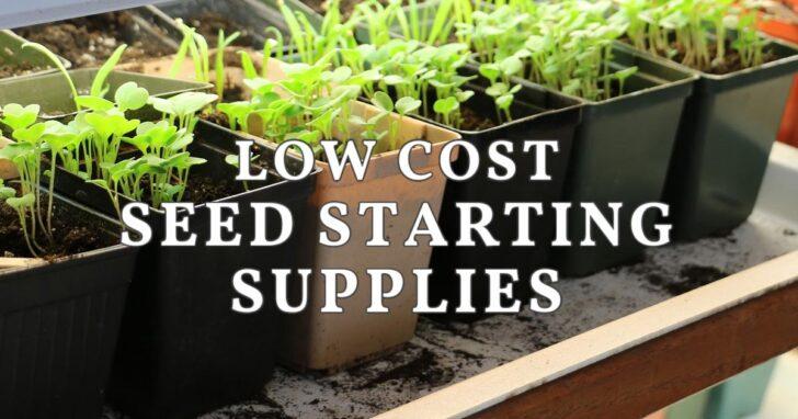 Seedlings growing indoors in pots.