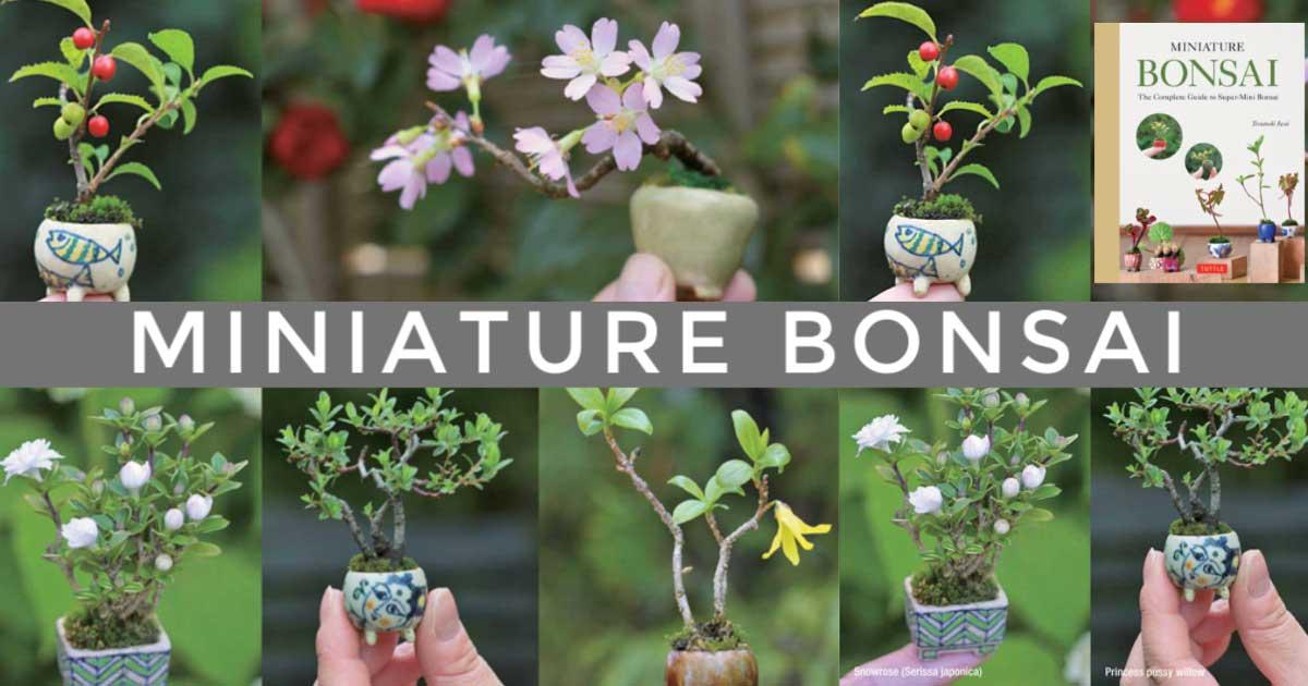 Examples of miniature bonsai plants.