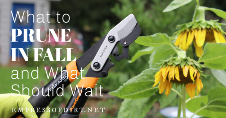 Loppers for pruning trees and shrubs in fall garden.