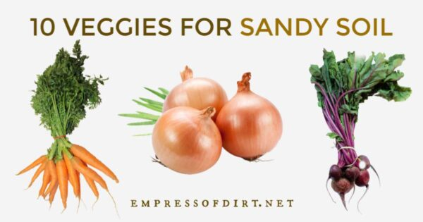 Vegetables that grow in sandy soil including carrots, onions, and beets.