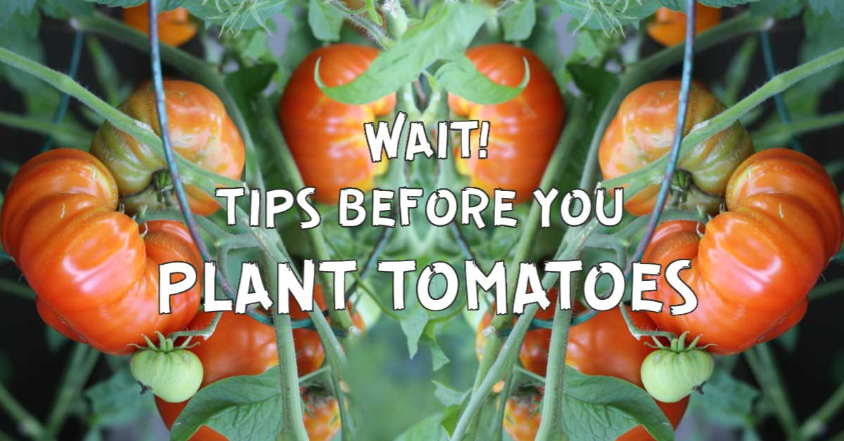 10 Best Tips Before You Plant Tomatoes Empress Of Dirt