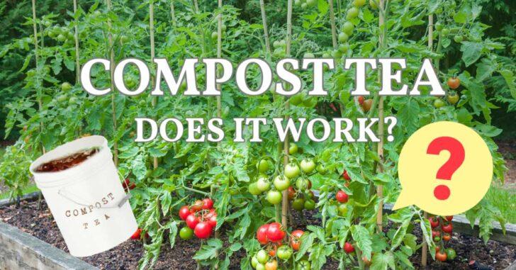 Bucket of compost tea in a vegetable garden.