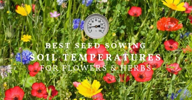 Flowers from seeds started at optimum germination temperatures.