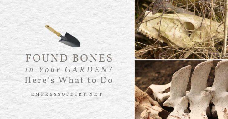 Animal bones found in the garden.