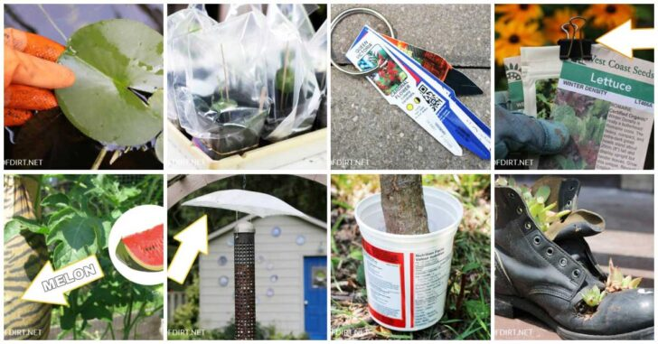 Examples of smart ways to solve common garden problems.