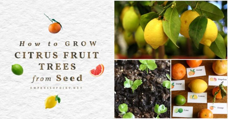 Citrus fruits, seeds, and plants.