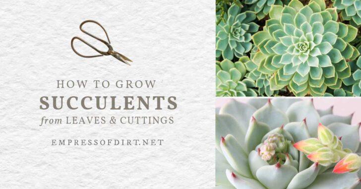Succulent plants.