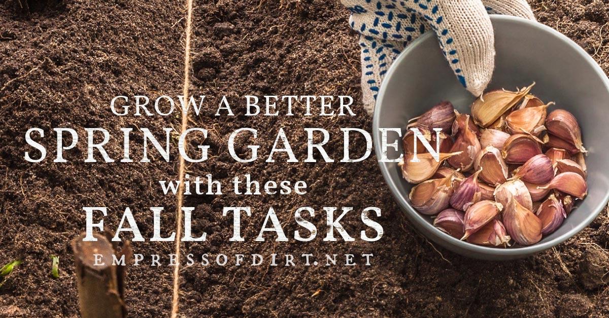 Planting garlic cloves in the fall garden.