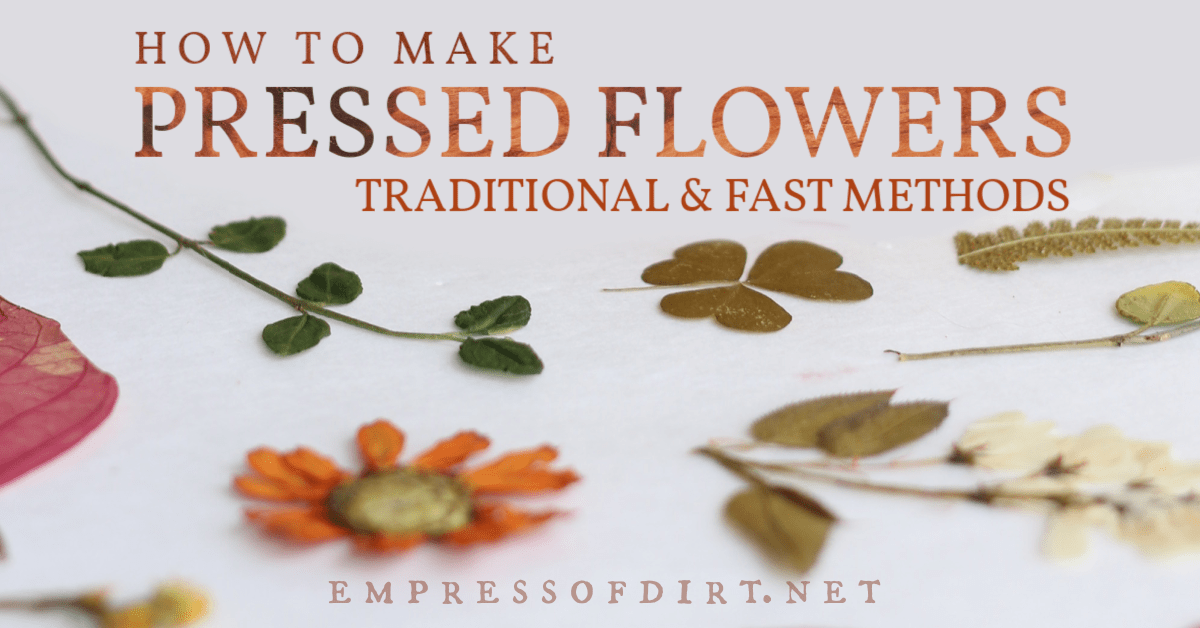 Pressed flowers made from flowers, leaves, and stems.