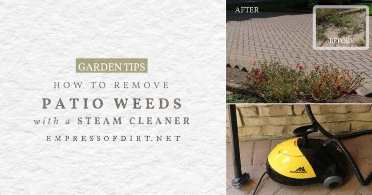 Using a steam cleaner to remove weeds on a brick patio.