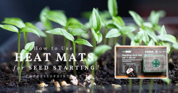 Seedlings growing on heat mat.