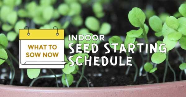 Indoor Seed Starting Plan Weekly Schedule Empress Of Dirt